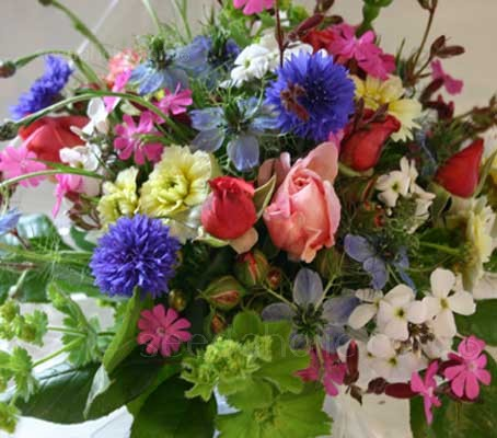 Growing to a height of around 60 to 70cm (24 to 28in), the Tall Cut Flowers, Annual Mix produces large quantities of flowers for cutting.