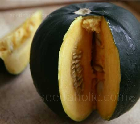 It is a summer-fruiting squash variety like a courgette but with the creaminess and superb flavour of a winter storing squash.