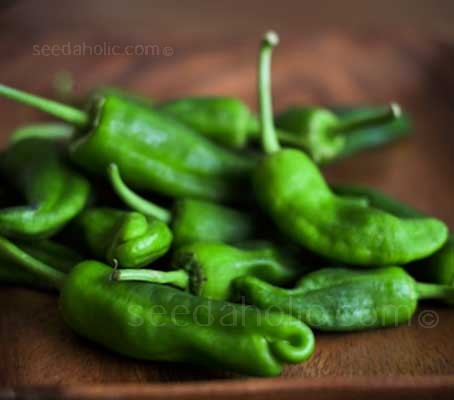 Often served in Tapas bars, Pimientos de Padrón are amazingly tasty, tiny fresh peppers that are a Spanish delicacy.