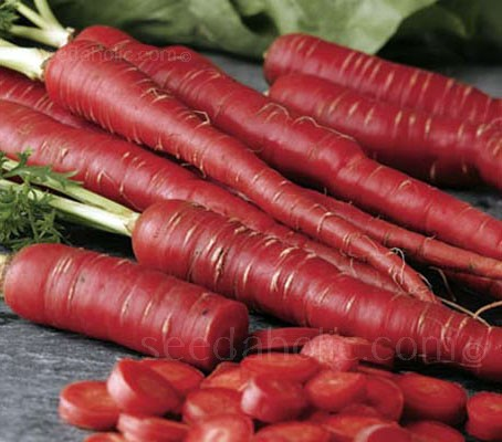 "Bred in Japan, Carrot ""F1 Samurai"" is a distinctive and beautiful carrot, with long tapered roots and uniform bright red skin."