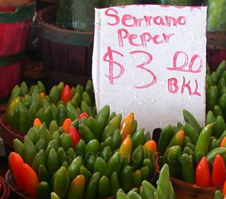 The Serrano, meaning 'from the mountains', is native to Mexico and south-west America.