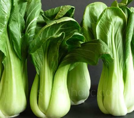 Shanghai Bok Choy is a special green stem variety with glossy, dark green leaves, thick green petioles and an attractive hourglass shape.