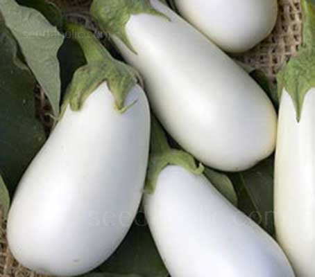 Aubergine 'Snowy' is an elegant snow-white eggplant with medium-thick skin and delicate sweet flavour.
