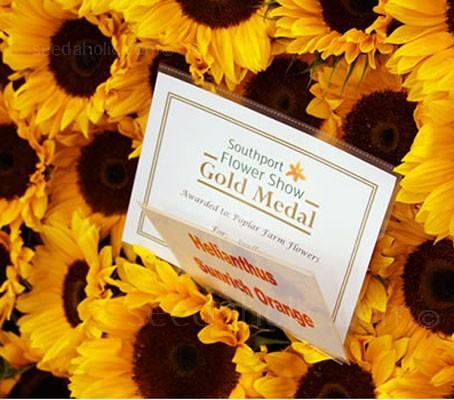 'F1 Sunrich Orange' is premium sunflower, perfect for cut flowers.
