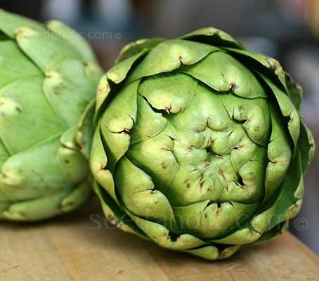 Artichoke 'Tavor' is a vigorous re-selection of Green Globe that provides a much easier growing experience.