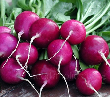 This dramatic, magenta-skinned variety is quick to mature and makes a delightful presentation on the plate.