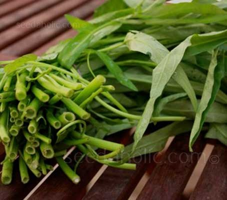 With spinach-like leaves and long hollow stems, almost all parts of Water Spinach are edible.