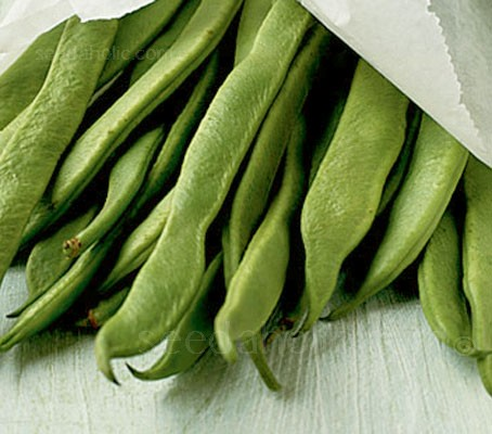 Runner Bean 'White Emergo' is a cousin of the famous red scarlet runner, but with decorative clear white blooms.