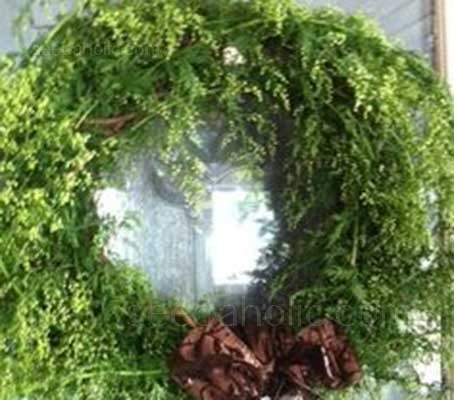 Sweet Annie has been used for centuries in its dried form in wreaths
