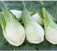 Cabbage 'Filderkraut' Organic