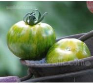 Tomato 'Green Zebra' Organic