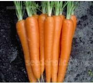 Carrot 'F1 Laguna' Organic
