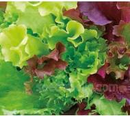 Baby Leaf Mix 'Classic Lettuce Mix', Organic