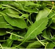 Rocket, Wild Rocket 'Olive Leaf'