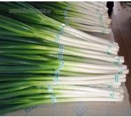 Onion, Bunching 'Ishikura', Organic