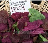 Orach 'Red' Mountain Spinach, Organic