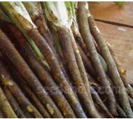Scorzonera hispanica, Organic