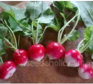 Radish 'Sparkler' Organic