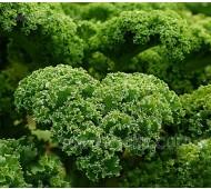 Kale 'Westland Winter', Organic