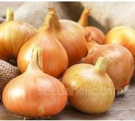 Onion 'Stuttgart', Organic