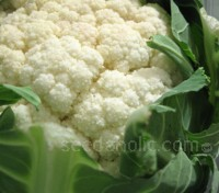 Autumn Giant is a well-known and respected maincrop cauliflower with large dense white curds.