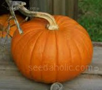 'Small Sugar' pumpkins produce small, sweet orange pumpkins shaped like a flattened globe.