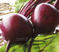Beetroot Boltardy is a smooth skinned globe variety with excellent resistance to bolting.