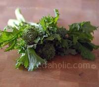Broccoli raab, Rapini, Cima di Rapa