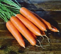 Carrot F1 Eskimo is one of the most cold tolerant varieties available.