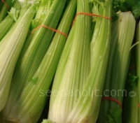 Celery Golden Self Blanching produces thick, crisp, juicy, deeply ribbed, aromatic stalks of celery
