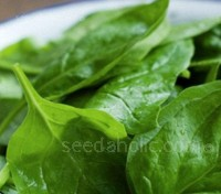 Spinach 'F1 Chevelle' is slow to bolt and resists downy mildew
