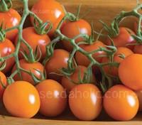 Tomato 'Clementine', Organic