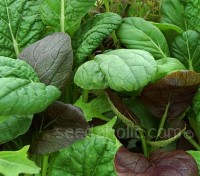 "Baby Leaf Salad Mix - ""Pak Choi Colour Crunch Mix"""