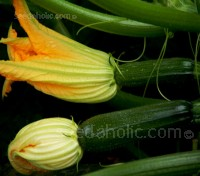 Courgette 'F1 Midnight' is a compact, spineless variety that has been specially bred for container growing or for small gardens.