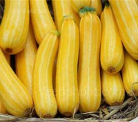 Courgette 'F1 Sunstripe'