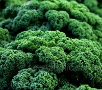 Kale 'F1 Winterbor'  is a very frost resistant medium-tall variety with dark blue-green finely curled leaves.