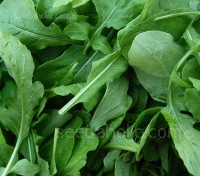 Rocket 'Green Brigade' is a refined variety of the classic salad rocket type.