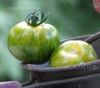 This gorgeous, tangy Green Zebra has become one of the most recognised tomatoes in the Heirloom trade.
