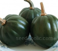 Winter Squash 'Honey Bear' is one of the sweetest varieties currently available.