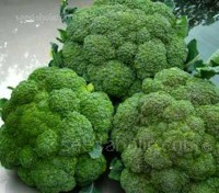Ironman is a very popular variety with home and market gardeners and is the most widely grown commercial broccoli.