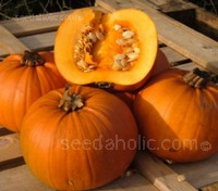 Pumpkin F1 Mars has been bred to be a good performer even during difficult production seasons.