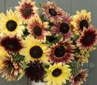 Helianthus annuus 'Medium Red Mix Sunflower' Organic