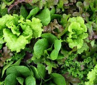 The Mesclun mix is based on the traditional recipe and contains a variety of lettuces, rocket and endive, designed to have a colourful mix of textures and tastes.