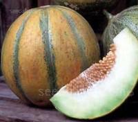 The Ogen Melon has a longstory of devoted connoisseurs.