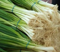 The White Lisbon is an old favorite and ever popular Spring Onion.