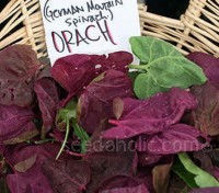 The heart-shaped leaves of Orach have a pleasant flavour and the colour is always spectacular.