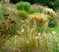 Annual Ornamental Grasses Mix