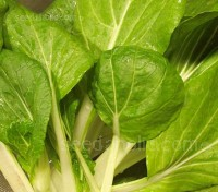 Pak Choi 'F1 Golden Yellow' leaves are bright yellow-green and the leaf texture is much softer than other pak choi types.