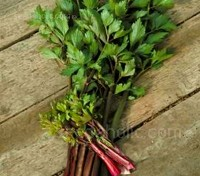 This new red stemmed variety of cutting leaf celery is lovely in container gardens and small herb gardens.