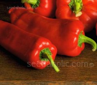 Sweet Pepper 'Marconi Red' grow to around 16cm (7in) long and up to 6cm (2½in) in diameter at the shoulder